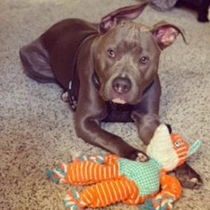 Best and Safest Toys for Dogs