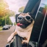 Keep Your Pets Safe In The Car