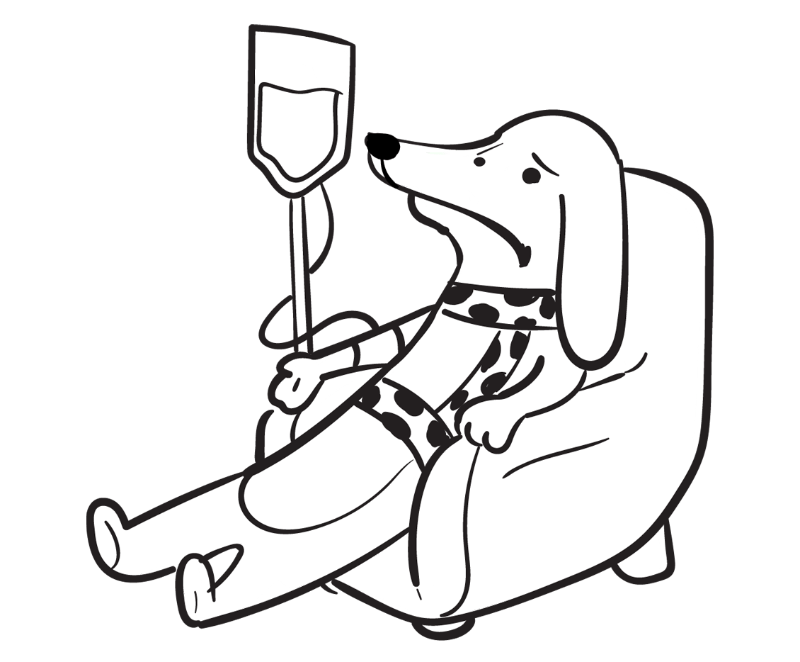 Spot Pet Insurance For When Your Dog Is Hospitalized