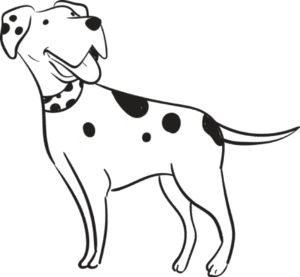 Spot Pet Insurance for Hunting Dogs