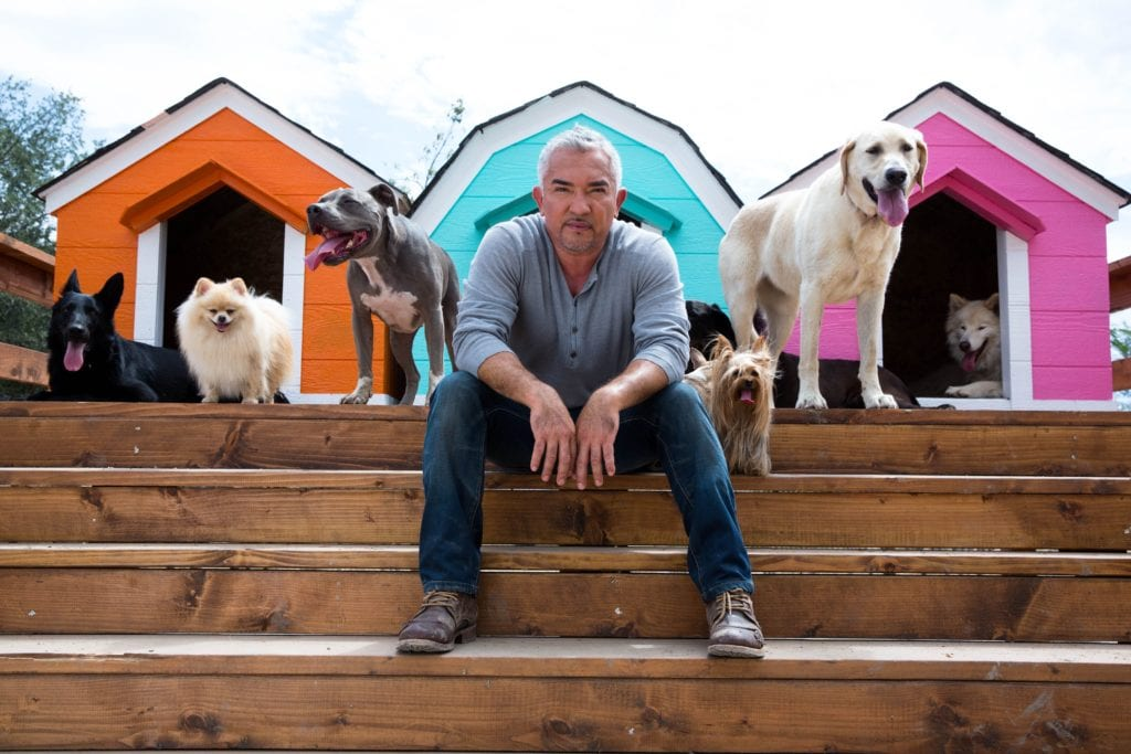 Cesar Millan tells dogs to stay
