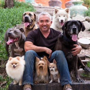 Cesar Millan joins forces with Spot Pet Insurance