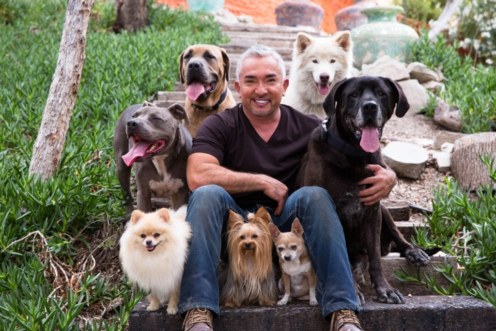 Cesar Millan joins forces with Spot