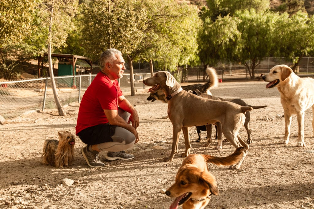 Cesar Millan asking Dog Come to him on his farm
