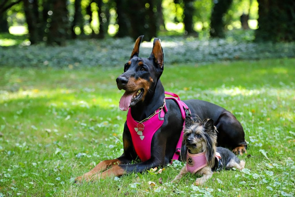 Dog harness leash & collar
