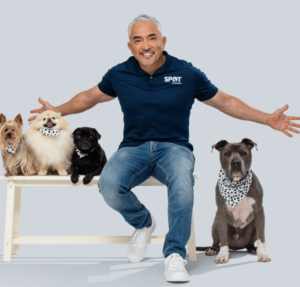 Cesar Millan with Dogs on Bench