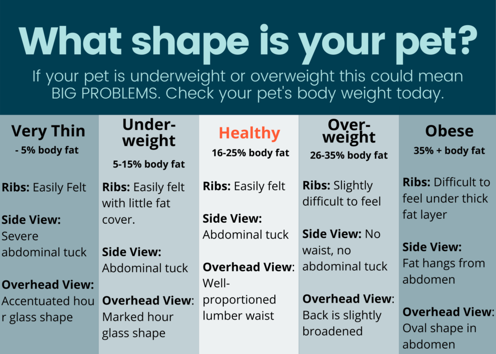 What shape is your pet? For a weight management plan for your pet