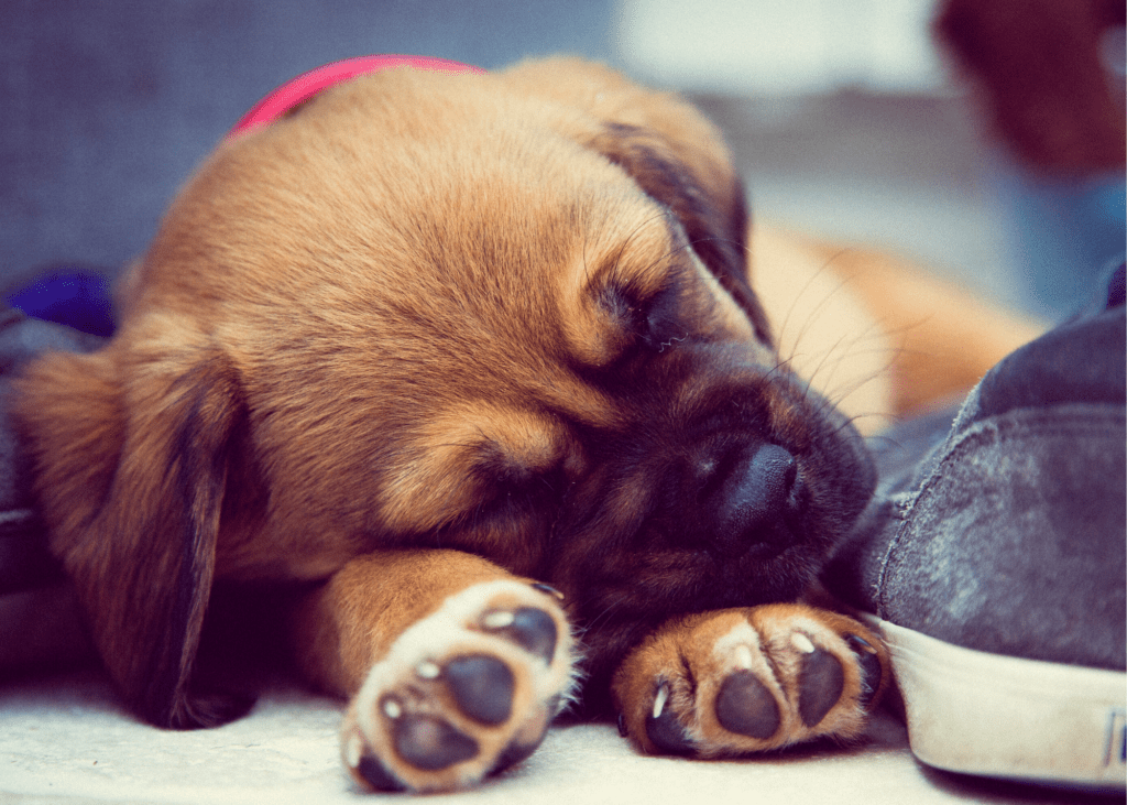 pet's paws healthy