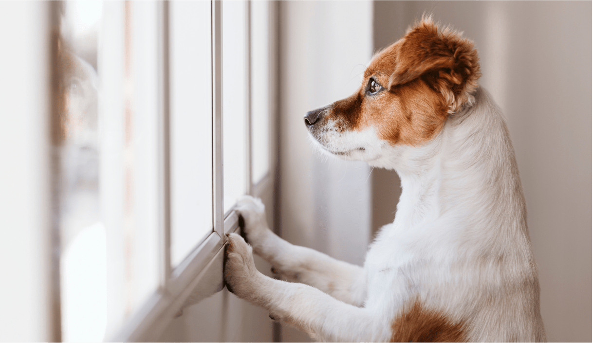 dog-window
