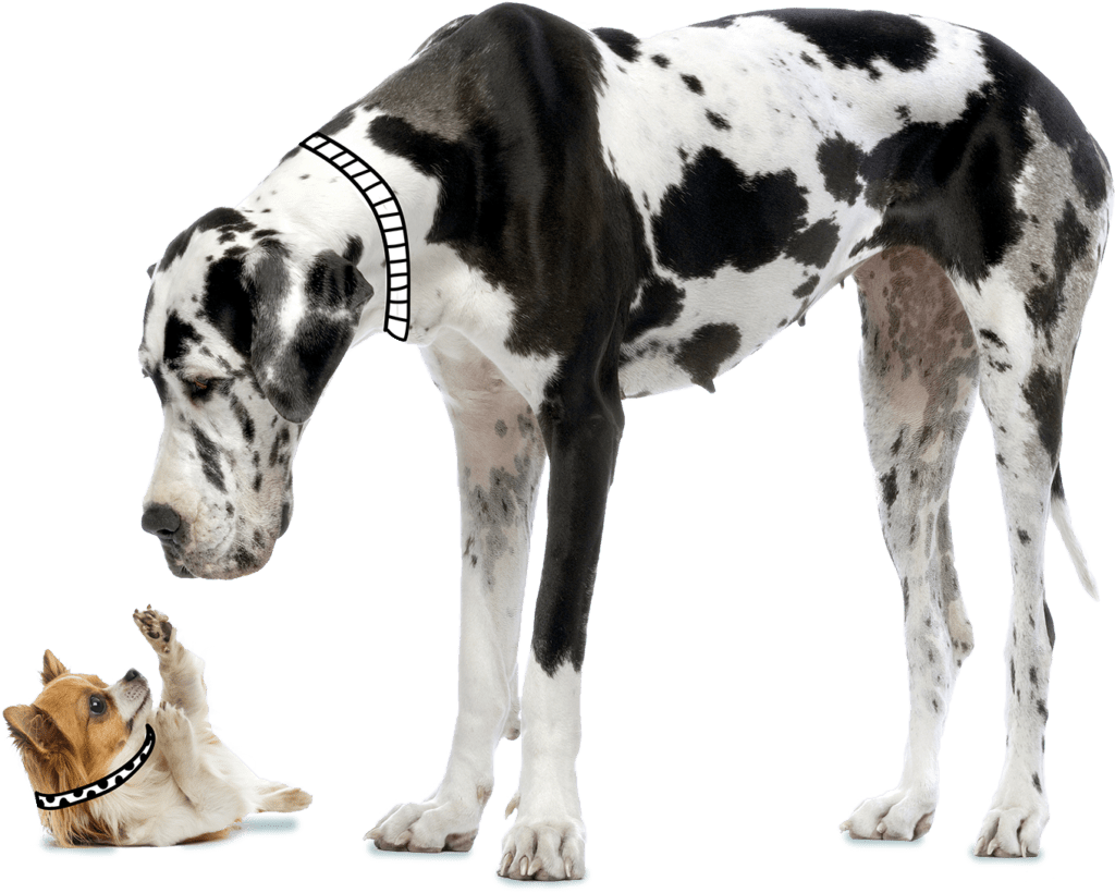 Great Dane and Small Dog