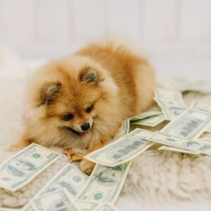 Pomeranian and Cash