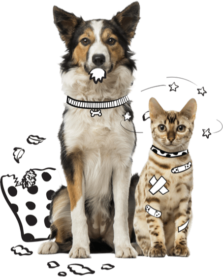 Dog and Cat with Pillow Graphic