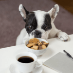 Dog looking at tea and cookies on table