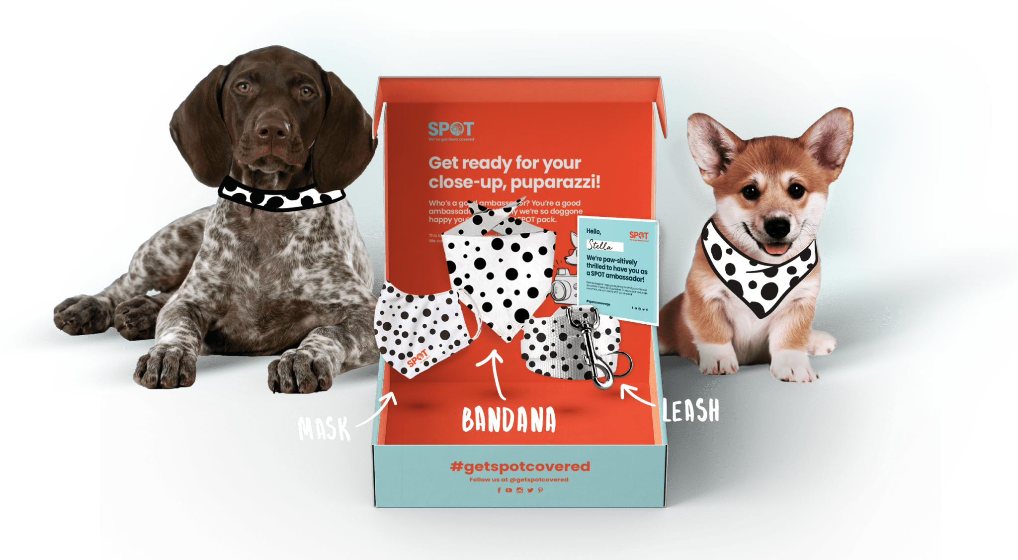 SPOT GIveaway Box with Dogs