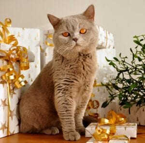 Cat with Holiday Presents