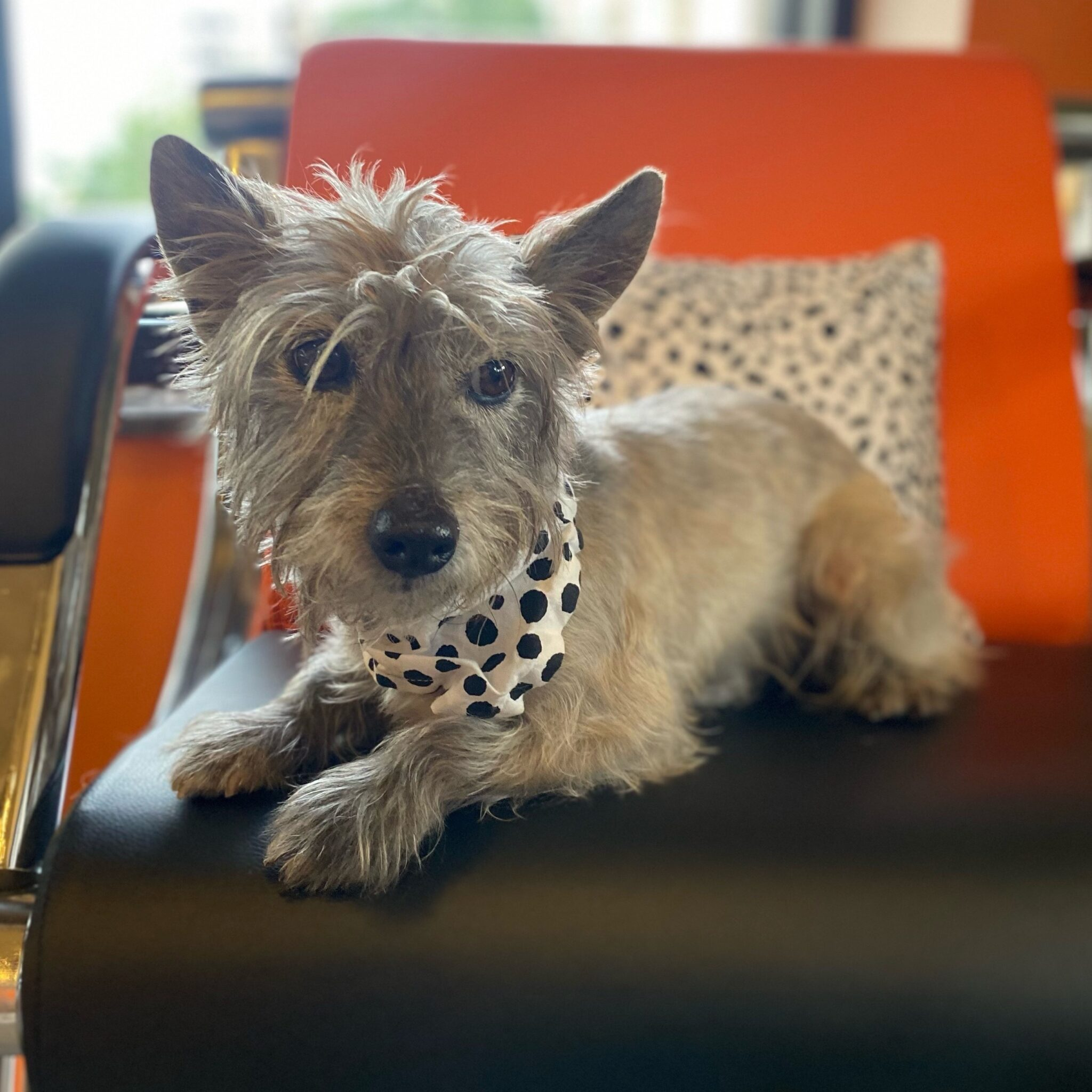 Little dog on chair