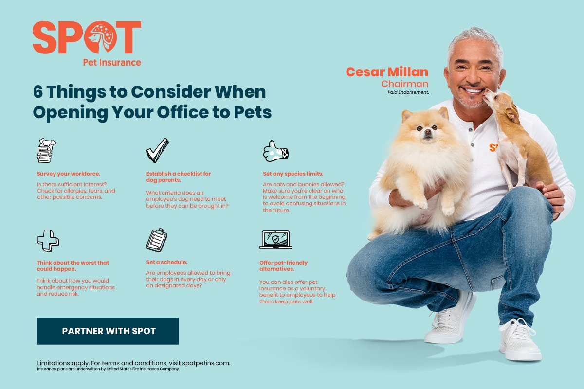 Tips for Dogs in the Workplace