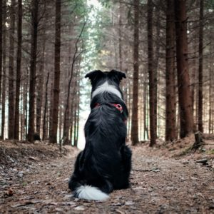 Dog Sitting on Path in the Woods