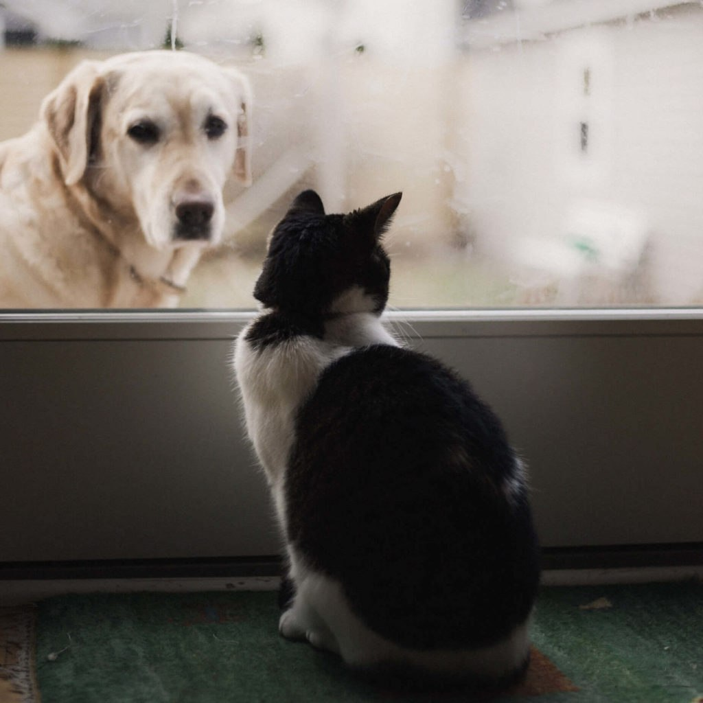 Cat inside looking at dog outside