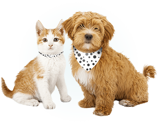 Dog and cat together sitting