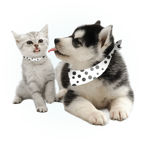 Dog and cat together friends