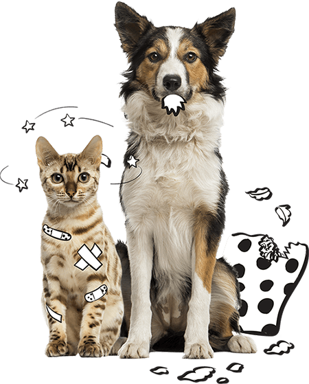 Dog and cat SPOT