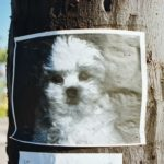 Lost Dog Sign on Post
