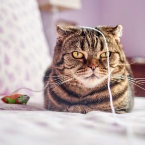 Cat with string on bed