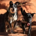Two dogs hiking red rocks