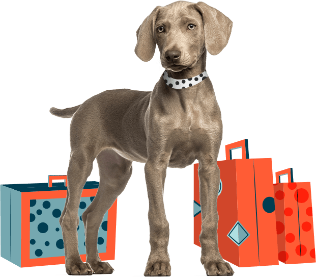 Dog with graphic suitcases