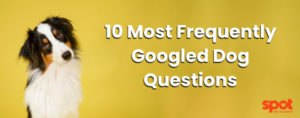 most searched dog questions on Google