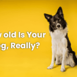 how to tell a dog's age in human years