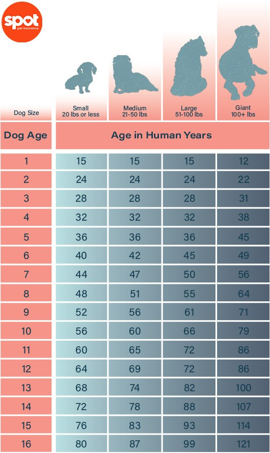 Final-Approved-How to Tell a Dog's Age in Human Years_ A Step-by-Step Guide