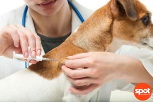 Why you should microchip your pet Free to use from Canva