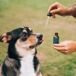 Woman giving pet CBD oil