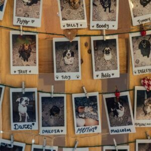 Pet polaroids on wall