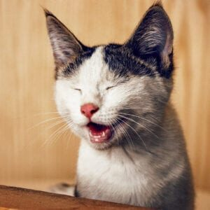 Spot-Pet-Insurance-Blogbowl-July-2020--is-your-cat-happy-5-signs-your-cat-is-happy-featured-image