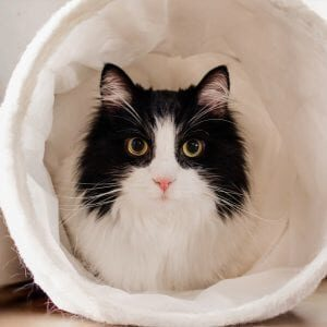 Spot-Pet-Insurance-Blogbowl-May-2020-Emergency-Room-vet-visits-cat-featured-image