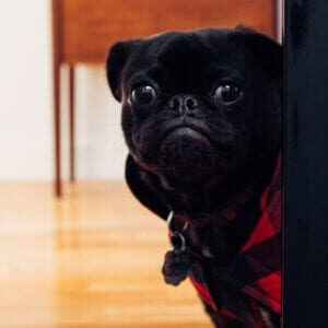 Spot-Pet-Insurance-Blogbowl-May-2020-Spot-Pet-Insurance-Blogbowl-Does Your Dog Need Antidepressants-featured-image